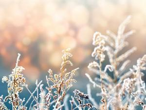 冬天皮肤痒是什么原因